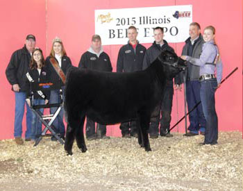Supreme and Champion Angus Heifer – Dameron Lucy 4137 – Exhibited by Kalie Rumbold