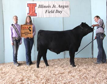 Reserve Champion Bred & Owned Bull - Schafers Classic Celebrity - Exhibited by Lizzie Schafer